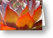 Cactus Flower Digital Art Greeting Cards - Backlit Afterglow Succulent 2 Greeting Card by Amy Vangsgard