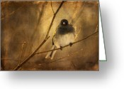 Eyed Greeting Cards - Backlit Birdie Being Buffeted  Greeting Card by Lois Bryan