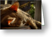 Buff Greeting Cards - Backlit Ears Greeting Card by David Patterson