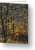 Generic Greeting Cards - Backlit Poplar Or Aspen Tree Greeting Card by Stephen Sharnoff