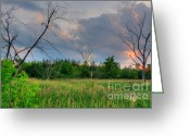 Suburbs Greeting Cards - Backlit Sunset Swamp Greeting Card by Deborah Smolinske