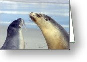 Seal Greeting Cards - Backtalk Greeting Card by Mike  Dawson