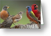 Wren Greeting Cards - Backyard Buddies Greeting Card by Bonnie Barry