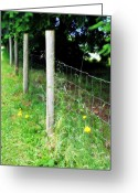 Photgraphy Greeting Cards - Backyard Fence Greeting Card by Cathie Tyler