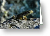 Lizard Greeting Cards - Bahamas 017 Greeting Card by Lance Vaughn