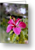 Seasons Framed Prints Prints Greeting Cards - Bahamian Flower Greeting Card by Deborah  Crew-Johnson