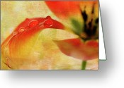 Orange Flower Photo Greeting Cards - Balancing Act Greeting Card by Rebecca Cozart