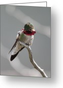 Shine Greeting Cards - Balancing Act Greeting Card by Shane Bechler