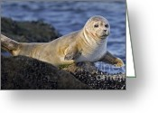 Sunbathing Greeting Cards - Balancing Act Greeting Card by Susan Candelario