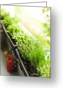 Greens Greeting Cards - Balcony herb garden Greeting Card by Elena Elisseeva