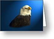 Reelfoot Lake Greeting Cards - Bald Eagle - BLYTH - In Captivity Greeting Card by J Larry Walker