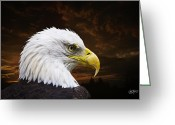 Featured Tapestries Textiles Greeting Cards - Bald Eagle - Freedom and Hope - Artist Cris Hayes Greeting Card by Cris Hayes