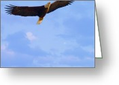 Reelfoot Lake Digital Art Greeting Cards - Bald Eagle - The Grand Master 2 Greeting Card by J Larry Walker