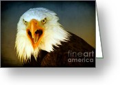 Bird Of Prey Digital Art Greeting Cards - Bald Eagle 3 Greeting Card by Teresa Zieba