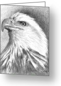 Eagle Drawings Greeting Cards - Bald Eagle Greeting Card by Arline Wagner