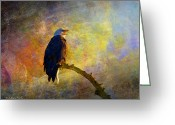 Larry Walker Greeting Cards - Bald Eagle Awaiting Sunrise Greeting Card by J Larry Walker