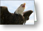 National Bird Greeting Cards - Bald Eagle Calling Greeting Card by Power And Syred