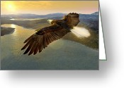 National Bird Greeting Cards - Bald Eagle In Flight, Artwork Greeting Card by Studio Macbeth
