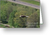 National Bird Greeting Cards - Bald Eagle In Flight One Greeting Card by Joshua House