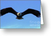 Impassioned Greeting Cards - Bald Eagle Intimidation Greeting Card by Dean Edwards