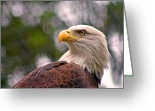 Philadelphia Greeting Cards - Bald Eagle Majestic Greeting Card by David Rucker