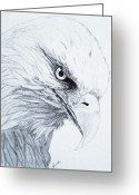 Falcon Drawings Greeting Cards - Bald Eagle Greeting Card by Nancy Rucker