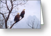 Reelfoot Lake Greeting Cards - Bald Eagle Pair Looking At Storm Coming Greeting Card by J Larry Walker