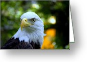 Brown Eyes Greeting Cards - Bald Eagle Greeting Card by Terri Mills