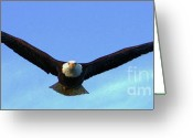 Impassioned Greeting Cards - Bald Eagle Victory Greeting Card by Dean Edwards