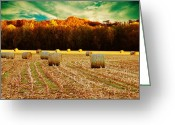 Tree Lines Greeting Cards - Bales of Autumn Greeting Card by Bill Tiepelman