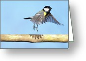 On The Move Greeting Cards - Ballerina Bird Greeting Card by Marcel ter Bekke