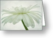 Daisies Photos Greeting Cards - Ballerina Greeting Card by Kristin Kreet