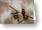 Oriole Digital Art Greeting Cards - Baltimore Oriole Greeting Card by Nina Stavlund