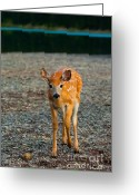 Fawns Greeting Cards - Bambi Greeting Card by Sebastian Musial