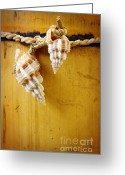 Spiral Greeting Cards - Bamboo And Conches Greeting Card by Carlos Caetano