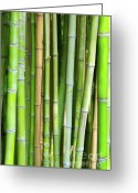 Striking Greeting Cards - Bamboo Background Greeting Card by Carlos Caetano