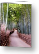 Bamboo Greeting Cards - Bamboo Grove Greeting Card by Shadie Chahine