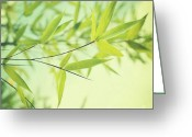 Bamboo Greeting Cards - Bamboo In The Sun Greeting Card by Priska Wettstein