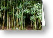 Wind Chimes Greeting Cards - Bamboo Wind Chimes  Waimoku Falls trail  Hana  Maui Hawaii Greeting Card by Michael Bessler