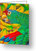 Amazon Parrot Greeting Cards - Banana Amazon Greeting Card by Daniel Jean-Baptiste