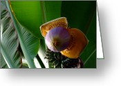 Tropical Fruits Greeting Cards - Banana Bloom Greeting Card by Mindy Newman