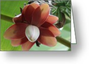 Exotic Tree Flowers Greeting Cards - Banana Tree Blossom Greeting Card by Valia Bradshaw