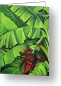 Banana Tree Greeting Cards - Banana Tree Flower Greeting Card by Dominica Alcantara