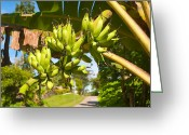 Banana Peel Greeting Cards - Bananas On Tree Greeting Card by Hans Engbers