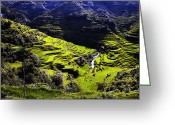 Terraces Greeting Cards - Banaue 2 Greeting Card by Skip Nall