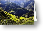 Terraces Greeting Cards - Banaue Greeting Card by Skip Nall