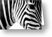 Zebra Photo Greeting Cards - Banding Greeting Card by Andrew Paranavitana