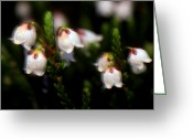 Cream Flowers Greeting Cards - Banff - Western Moss Heather Greeting Card by Terry Elniski