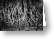 Ruin Greeting Cards - Banyan Tree Greeting Card by Adrian Evans