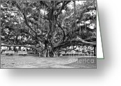 Lahaina Greeting Cards - Banyan Tree Greeting Card by Scott Pellegrin